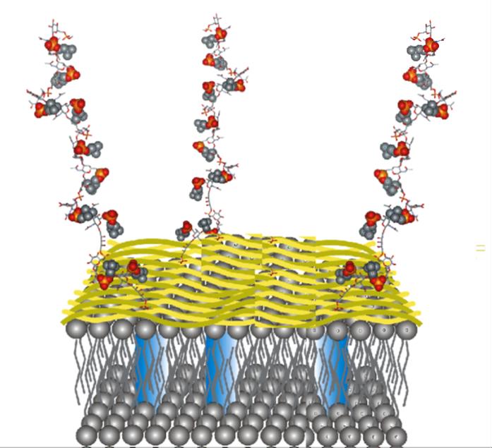 bioafinidad proteínas